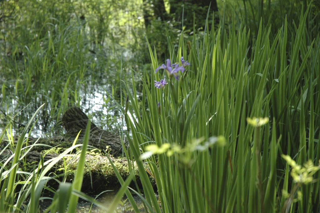 Harbor Trail wetland scene